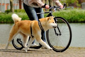 dogscooter